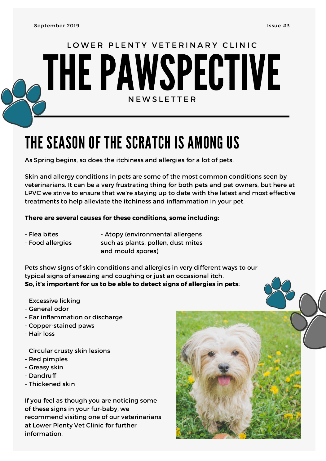 The Pawspective